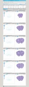 BrainNavigator - Workspace
