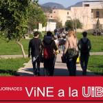 231912_vine-uib